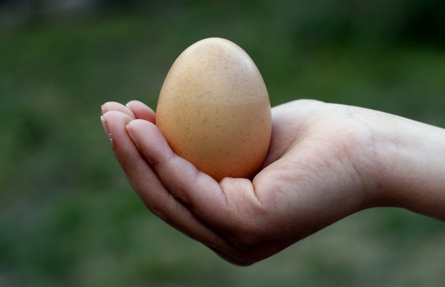 hand holding one egg