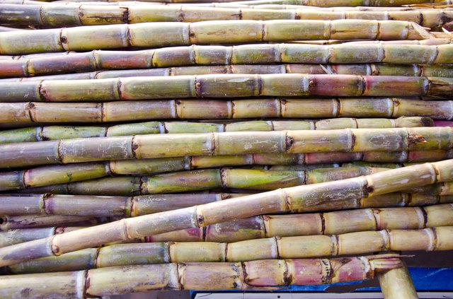 freshly harvested sugar cane