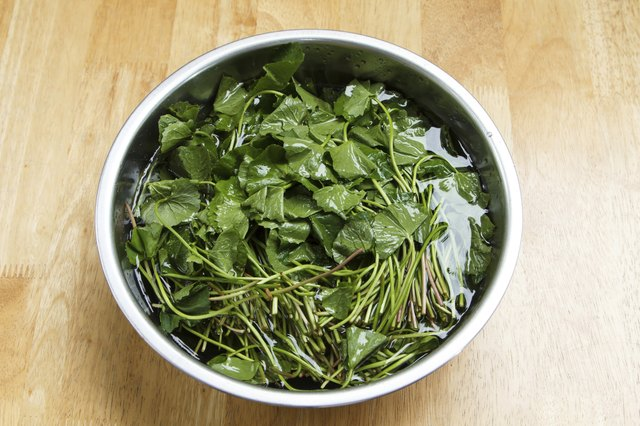 gotu kola herbs in bowl