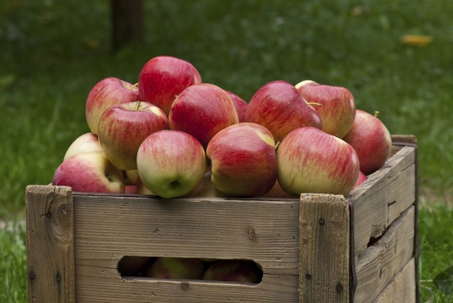 A crate of fresh apples