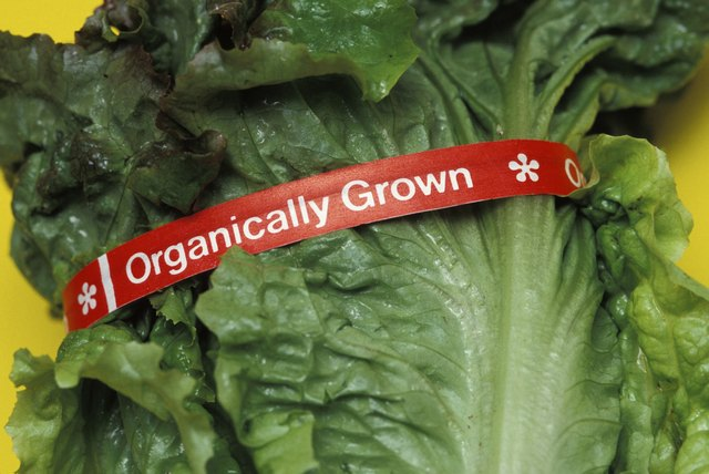 Organically grown lettuce