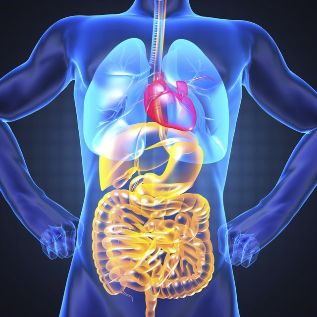 Definitions Of Anatomy Physiology Livestrong