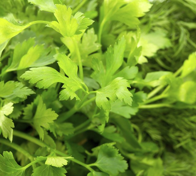 Parsley has potential anti-cancer properties.