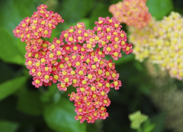 Yarrow can cause sunlight sensitivity or rashes.