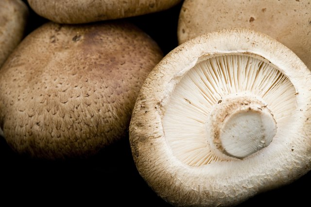 Shiitake mushrooms are a rich source of Vitamin D