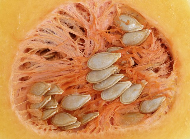 butternut squash seeds