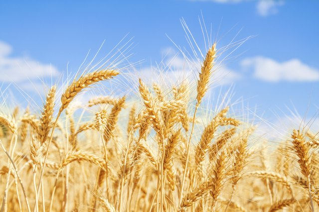 Gliadin, the specific type of gluten in all three parts of the wheat kernel, causes problems for people with gluten sensitivity.