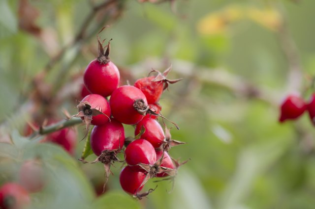 Use rosehip seed oil to reduce discoloration.