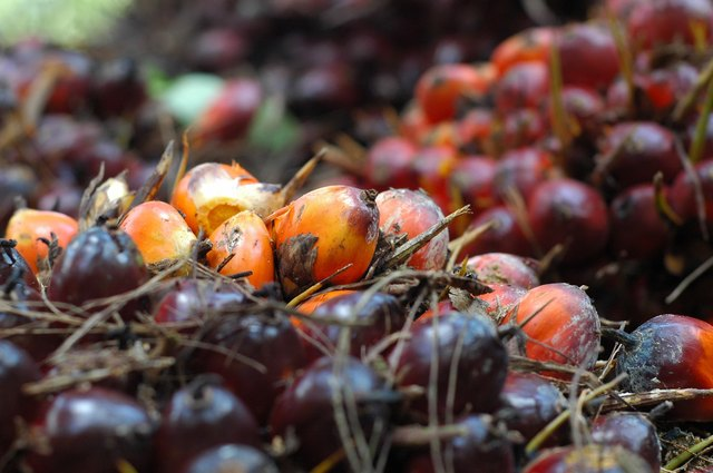 Palm oil can fight free radicals and even prevent them from forming in the first place.