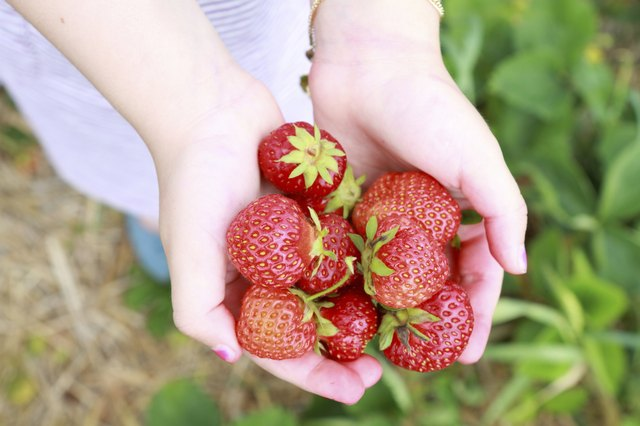 child holding handful of strawberries