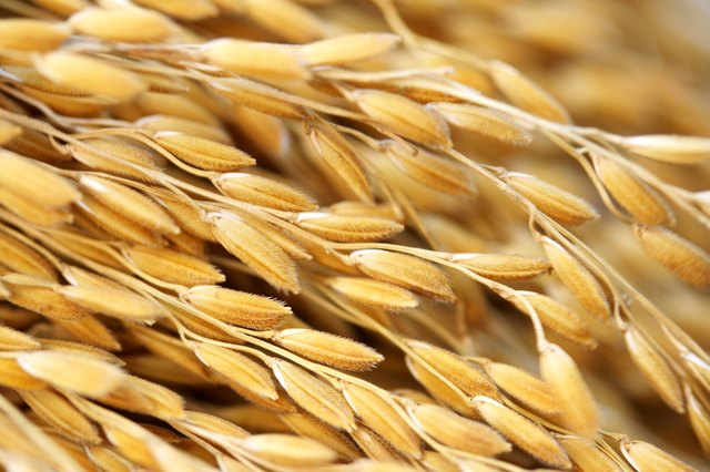 Grains are a good source of carbohydrates.