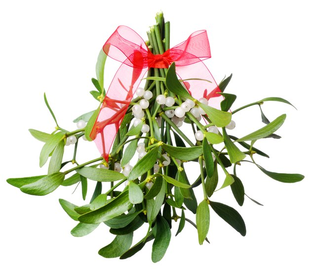 Mistletoe reduces blood viscosity.