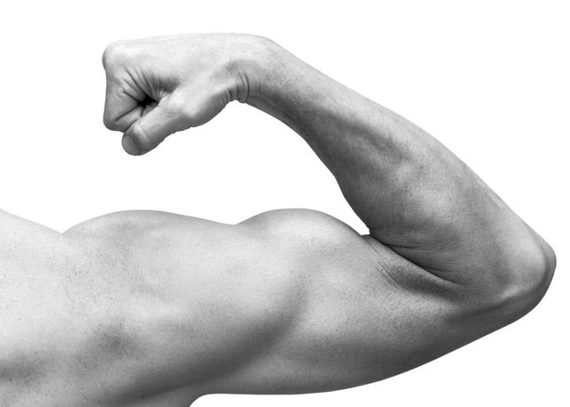 Triceps are the muscles on the bottom of the arm.