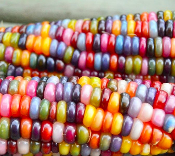 Can You Believe This Crazy Rainbow Corn Is Natural?