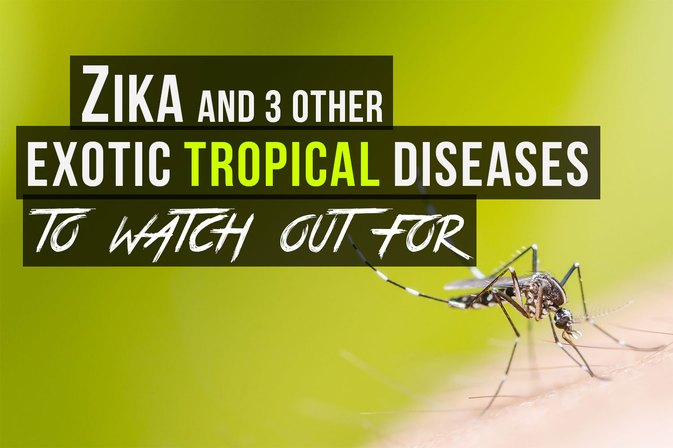 Zika and 3 Other Tropical Diseases to Watch Out For
