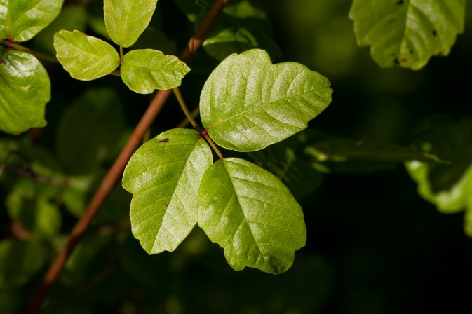 Never Eat These 3 Things If You've Ever Had Poison Oak or Poison Ivy