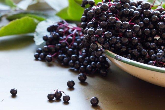 Black Elderberry Benefits Livestrong Com
