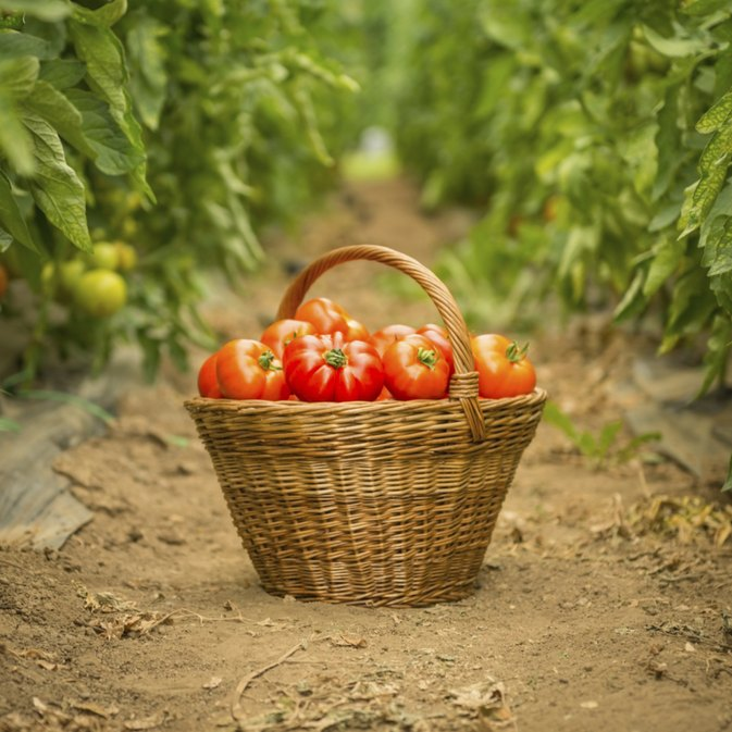 Vitamins and Minerals You Can Get From Tomatoes