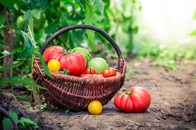 Benefits of Garden Vegetables LIVESTRONGCOM