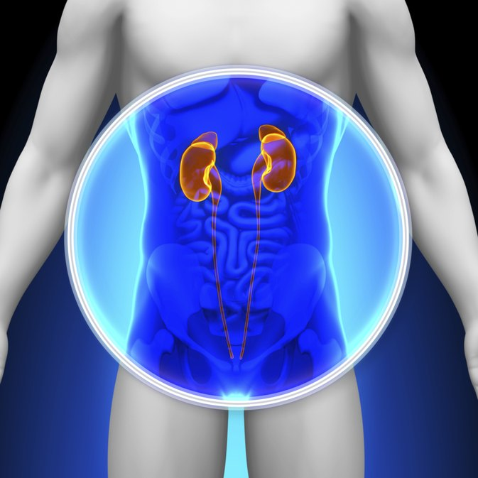 Causes for an Enlarged Kidney