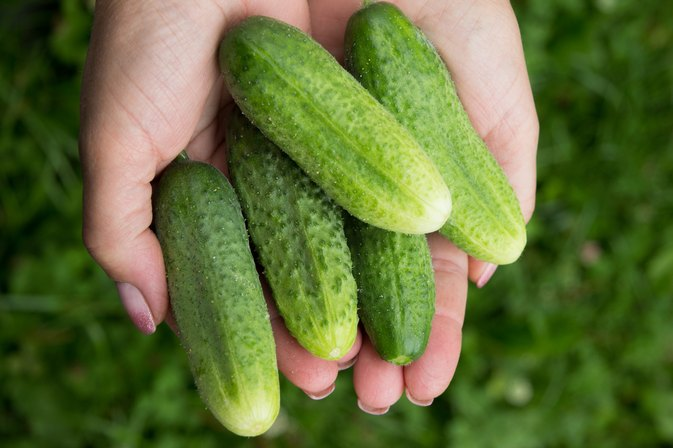 How to Get the Burp Out of Cucumbers