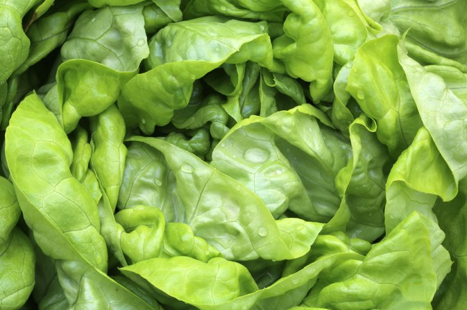 Is Lettuce Good While You Are Pregnant?