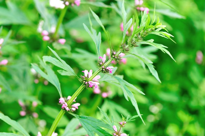 What Herbs Are Similar to Metoprolol?