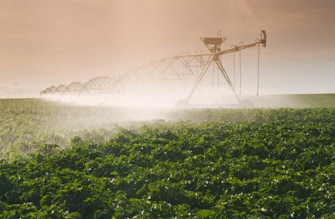 Which Foods Take the Most Water to Produce?