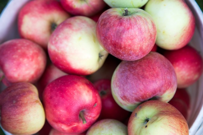 How Much Quercetin Is in an Apple?