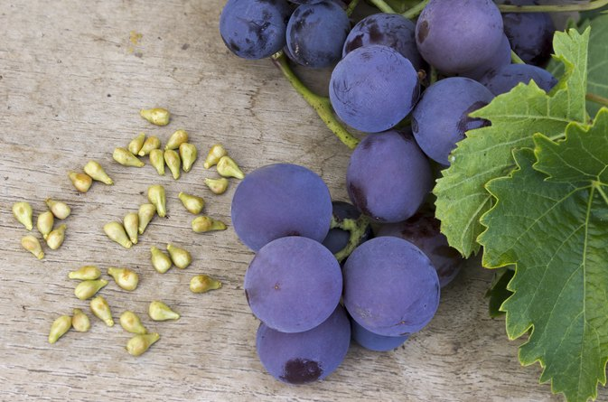 Grape Seed & Varicose Veins