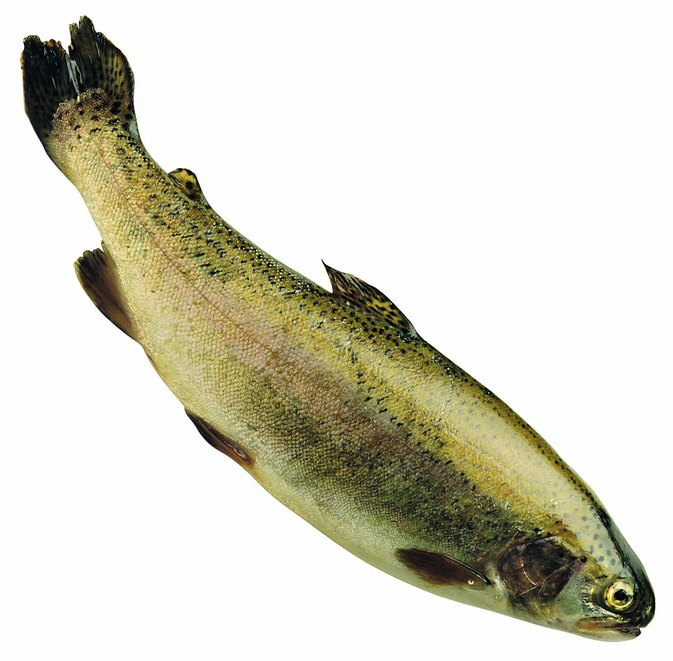 Nutrition Data & Facts on Trout