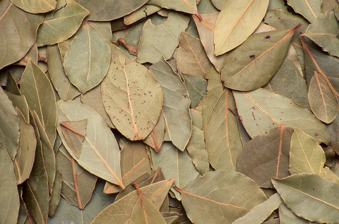 What Are the Health Benefits of Bay Leaves?