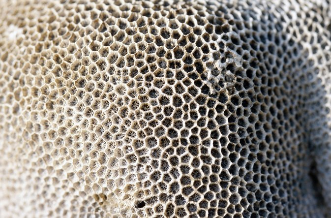 Nutrition of Honeycomb Beeswax