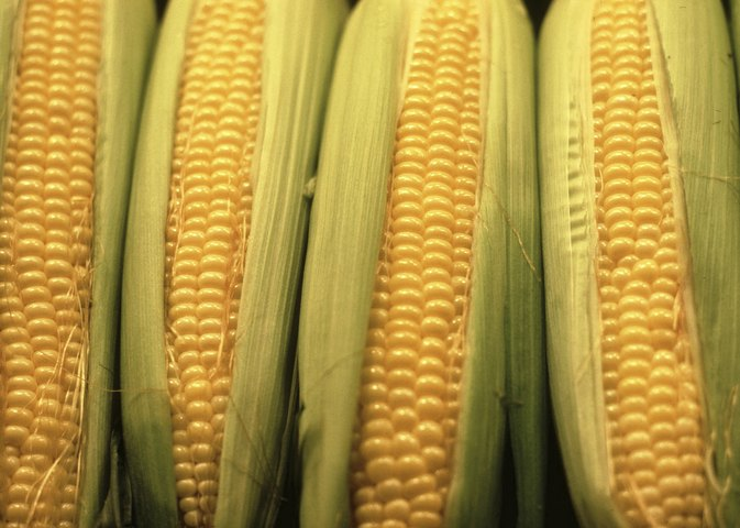 Health Benefits and Digestion of Corn
