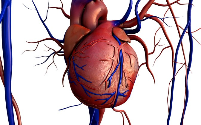 Blood Vessels That Carry Blood Away From The Heart Livestrong