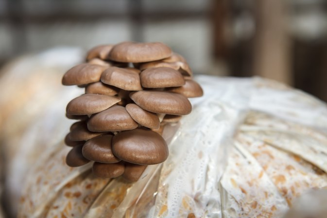 Symptoms Of A Mushroom Allergy