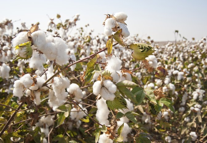 Advantages & Disadvantages of Cotton Clothes