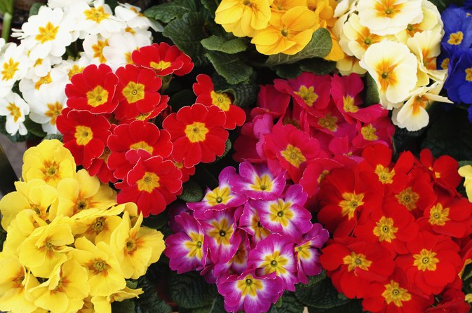 does evening primrose oil cause high estrogen levels livestrong com