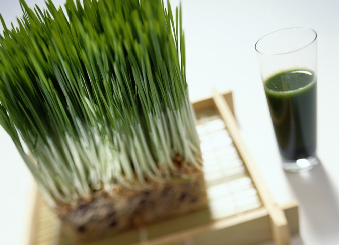What Are the Benefits of Wheatgrass for Fertility?