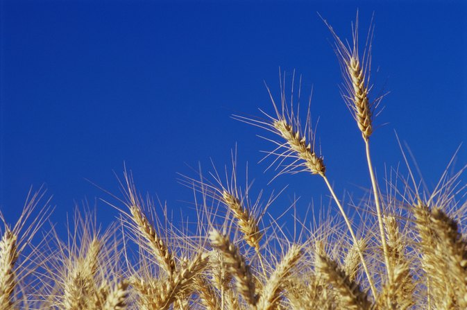 Can Wheat Cause Severe Gas & Stomach Pain?