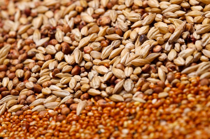 How to Cook Wheat Berries Without Soaking Them