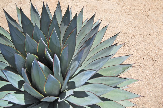How to Replace Sugar With Agave in Baking