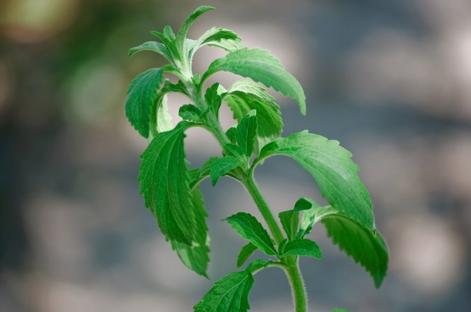 What Is Stevia Blend?