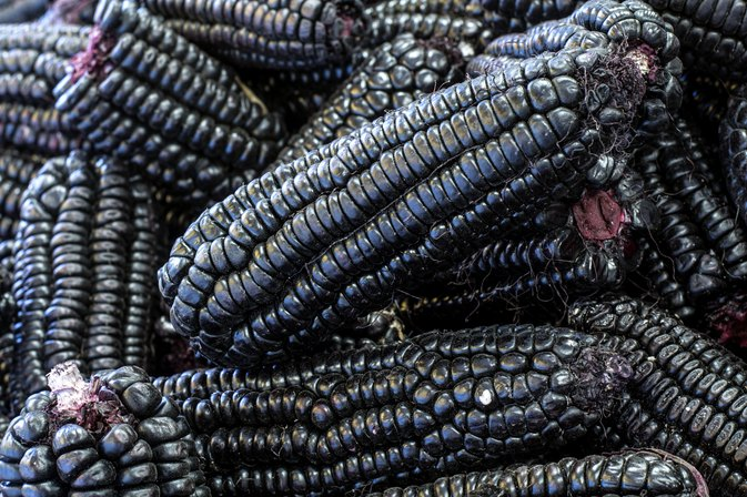 What Are the Benefits of Purple Corn Extract?