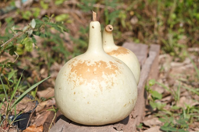 Bottle Gourd Nutritional Content