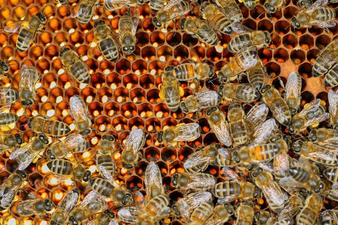 Is Royal Jelly Safe for Children?