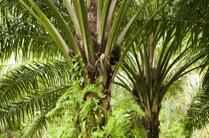 What Are the Benefits of Palm Oil on Hair & Skin?