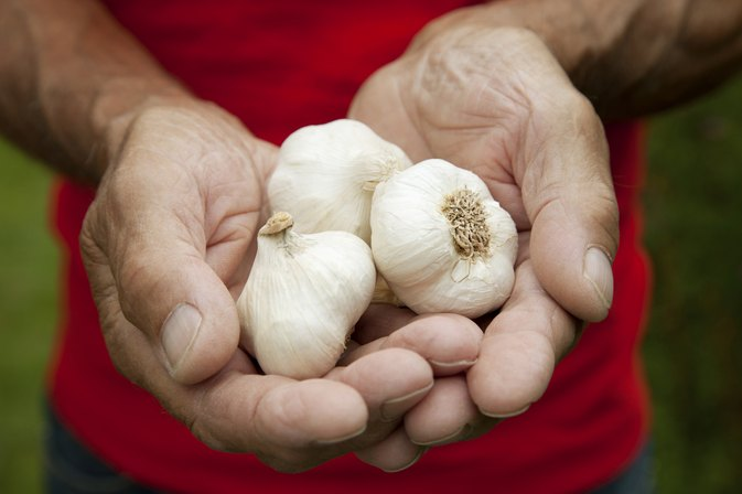 Is Garlic Bad for Gout?