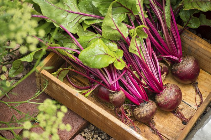 Why Are Beets Good for You?