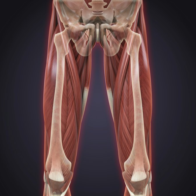 Sartorius & Gracilis Injuries